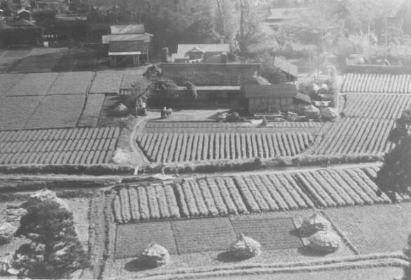 大昌寺山から北側温井家方面を望む 1956
