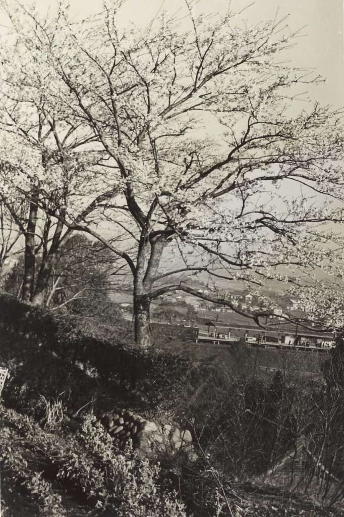 宝泉寺山から日野駅ホームを望む 1955