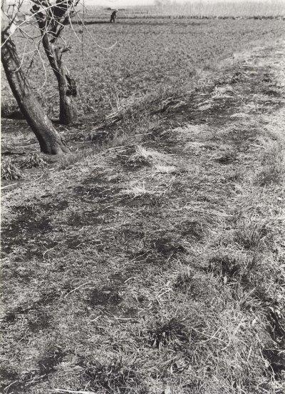 大昌寺坂上の畑 1960頃