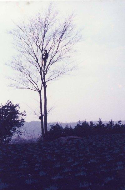 欅の木に登る少年 1962頃