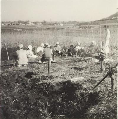 宅地整備のための桑畑開墾 1958