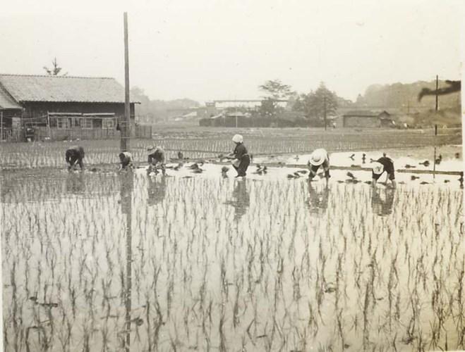 田植え 1958(2) - 西町