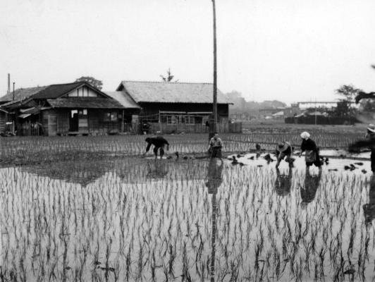 田植え 1958 - 西町