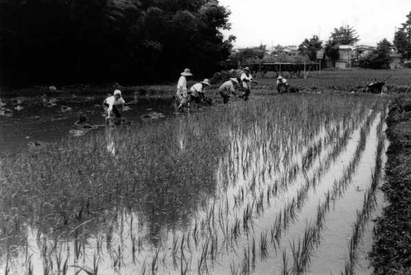 田植え 1959 - 北原