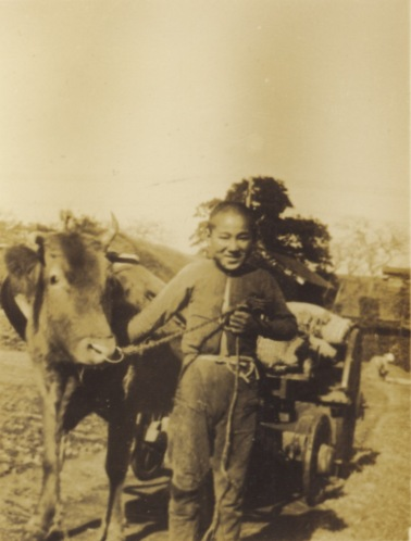 牛と少年 ‐ 東光寺 1937