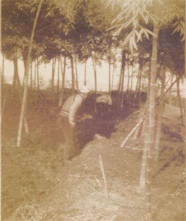 竹の子の根埋め - 東光寺 1937