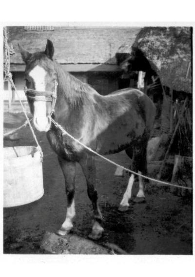 農耕馬 - 東光寺 1937