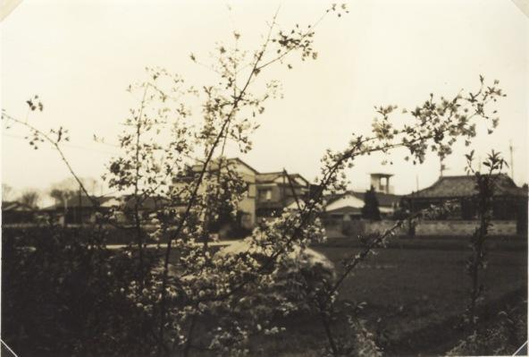 天野家の南側道路は四ツ谷道 1965頃