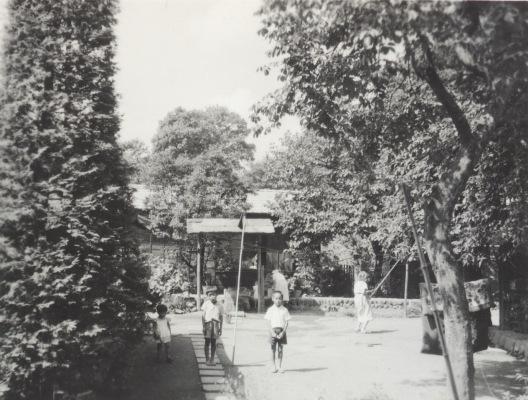 河野家 ‐ 庭 昭和30年代初頭
