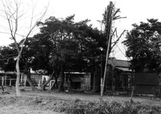 姫宮権現南側 1965頃