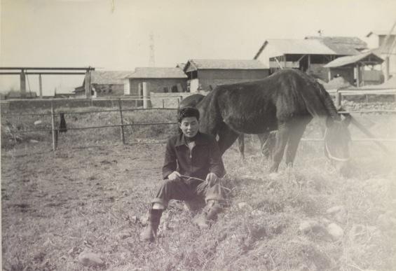 競馬 1953