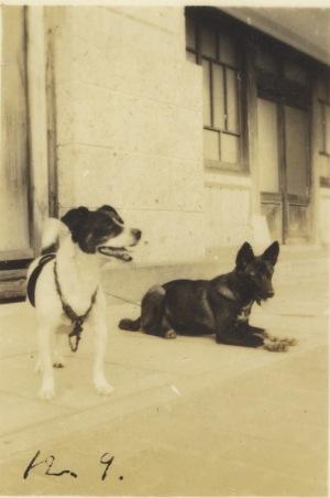 愛犬 2匹