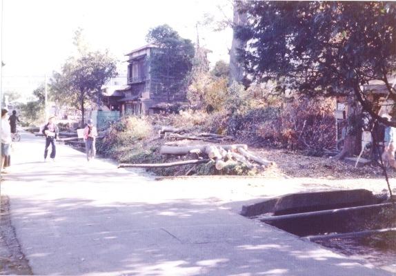 日野用水 1980 ‐ 大昌寺北側 ‐ 立木伐採 2