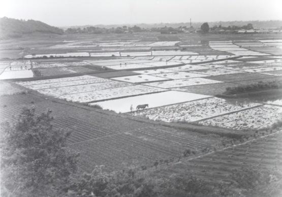 八丁田んぼ 1955