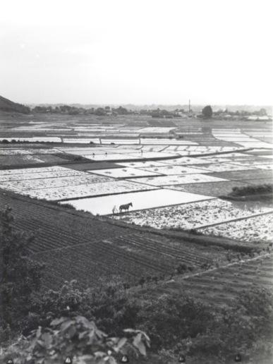 八丁田んぼ 1953
