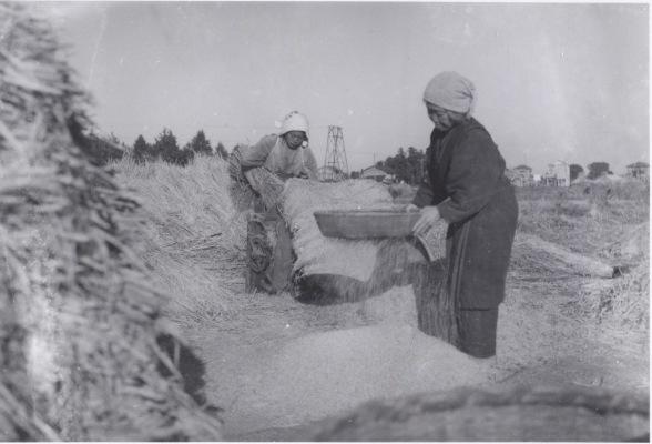 農作業 1941頃 ‐ 脱穀