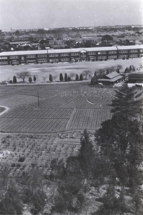 大昌寺山から一小方面 1960(2)