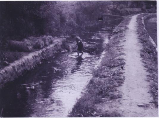 高木家裏の用水 1955
