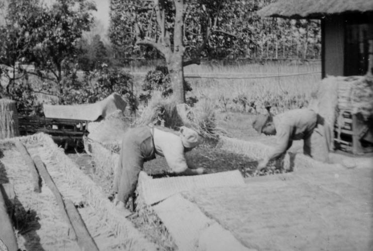 農作業 ‐ 苗床 昭和20年代から昭和30年代か