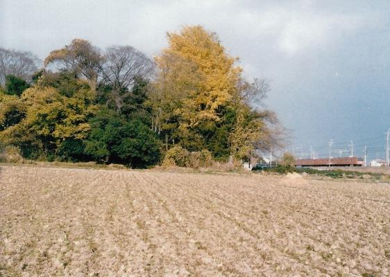 薬王寺の樹木 1984