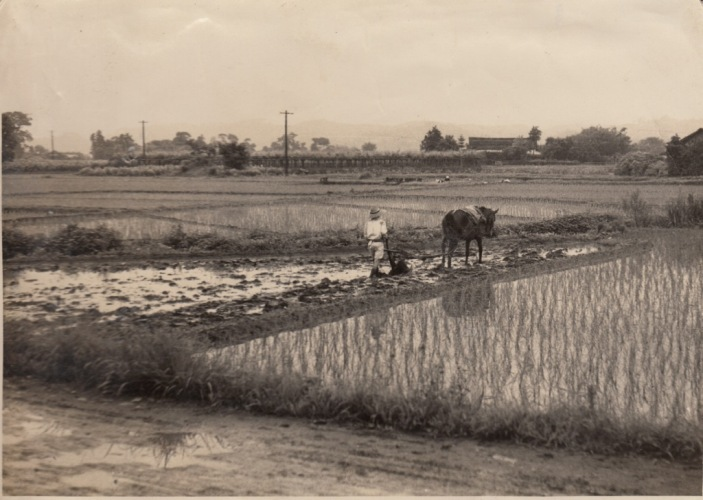 代掻き 昭和30年代 第一日野万