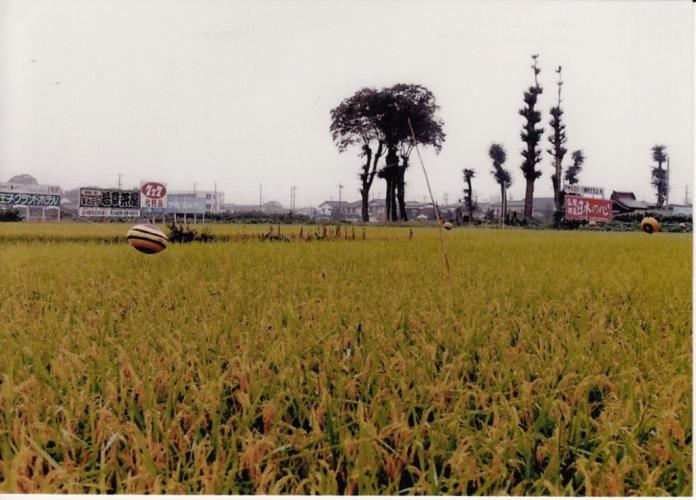 薬王寺樹木伐採後 1988