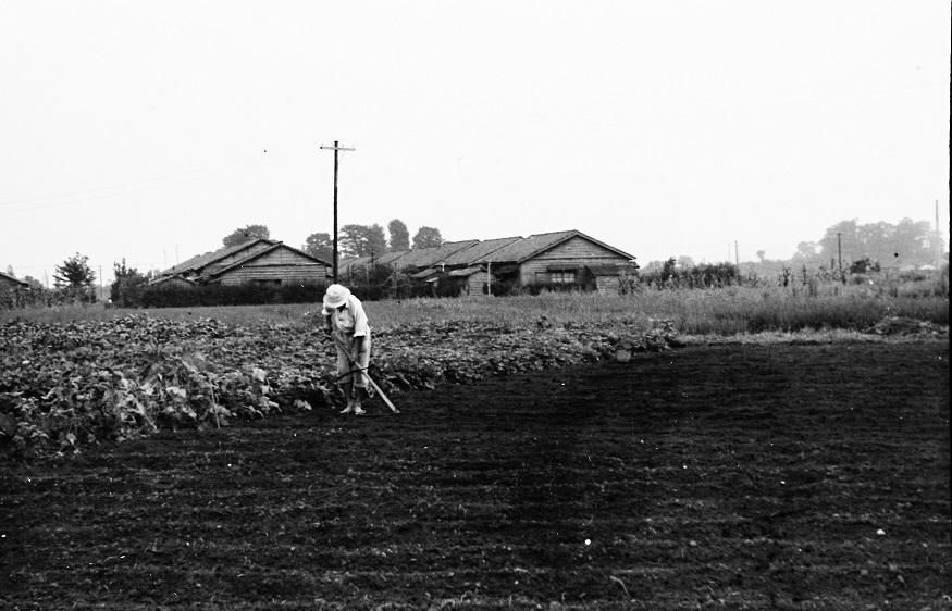 旧神鋼電機社宅から日野駅方面を望む 1955頃