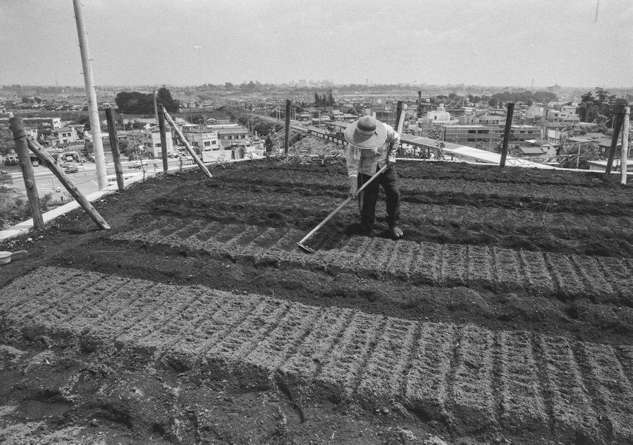 日野駅西側の高台の畑 1978(2)