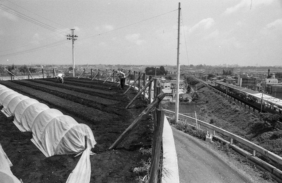 日野駅西側の高台の畑 1978