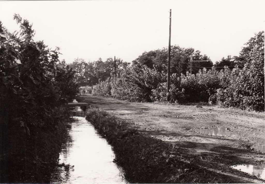 蚕糸試験場日野桑園(14)園内を流れる日野用水 1970年代後半