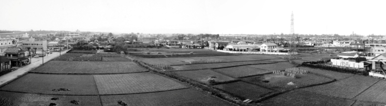 山屋敷のたんぼ 昭和43(1968)年 日野市郷土資料館提供