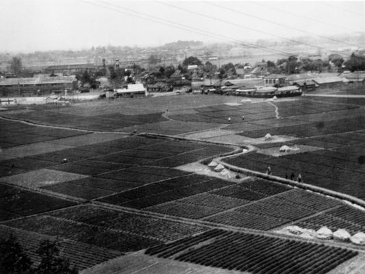 日野小の南側に広がる田園風景 昭和20年代後半 日野市郷土資料館提供